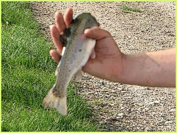 Tout pour la pêche le magasin la région de Néva spb